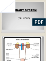 Histology of the Urinary system (1).ppt