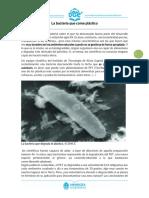 Lengua-3ro-Artículo-Bacteria