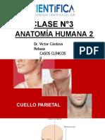 3. Anatomia_2_CCII_USCUR_2020.pptx