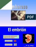embarazo y desarrollo embrionario