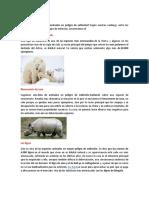 10 ANIMALES EN PELIGRO DE EXTINSION
