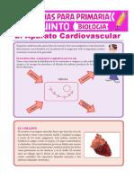 El-Aparato-Cardiovascular-