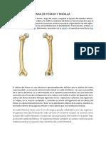 ANATOMIA DE FEMUR Y RODILLA.docx