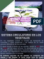 SISTEMA CIRCULATORIO DE LOS VEGETALES.ppt