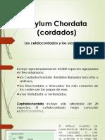 CLASE 14. Phylum Chordata (cordados)