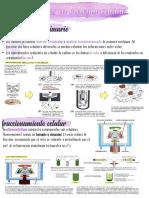 (ppt3) metodos en biologia celular pdf