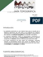 ANATOMÍA TOPOGRÁFICA clase III - IV.pdf