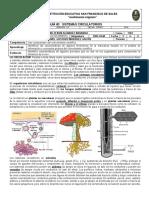 Sistemas Circulatorios - Oscar Alviarez - 1103