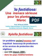Xylella-fastidiosa-une-Menace-serieuse-pour-les-plantes-au-Maroc