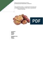 MODELO_PNT_PAPA (1) (1).pdf