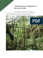 La magia del bosque seco emerge de un antiguo potrero en el Huila 6