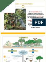 losecosistemas 2 B.pptx