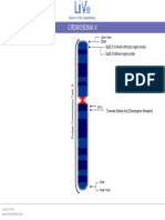 cromosoma-x