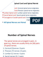 Division of Spinal Cord.ppt