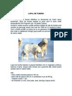 LUPUL DE TUNDRA ANIMALE