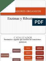 7 enzimas