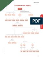 MAPA CONCEITOS.pdf