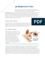 Eye Discharge (Epiphora) in Cats.docx