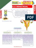 El-Ciclo-Menstrual-para-Sexto-Grado-de-Primaria.doc