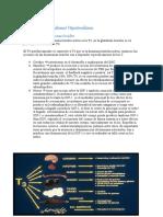 Fisiopatologia 5.2