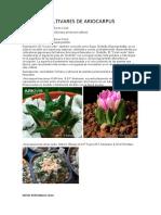Cultivares de Ariocarpus Jsgg
