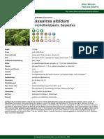 sassafras-albidum-pdf-5309-de.pdf