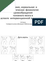 анатомия интракраниальных артерий.pdf