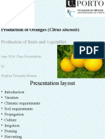 Production of Oranges (Citrus sinensis)