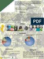 Poster Identificacion.pptx