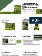Lección n° 7 Plantas con flores y sin flores