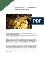 Sector Bananero (1)