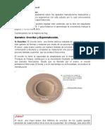 guia de ovocitos ciencia sexto.docx