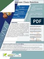 16_Detection_PCR
