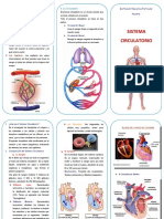 -Triptico-Sistema-Circulatorio.docx