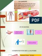 sistema cardiovascular abril 15-20
