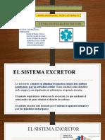 sistema excretor (5)