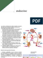 tutorial endocrino