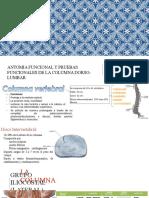 columna anatomia y pruebas funcionales