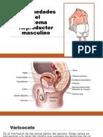 enfermedades del sistema reproductor masculino.pdf