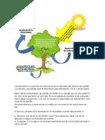 La fotosíntesis grado sexto