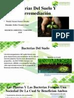 exposicion suelo MICROBIOLOGIA lista xd