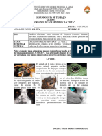 guia virtual sentido de la vista grado 8