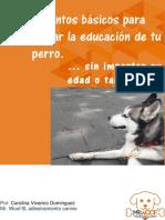 7 básicos para iniciar la educación de tu perro-6274-brn
