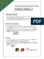 Reino Protista - Protozoos.doc