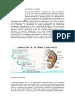 FORMACION DE LAS YEMAS PULMONARES