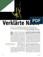 Verklärte Nacht - Glühwürmchen Diethelm - Zeitpunkt_170827