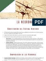 psi-la-neurona