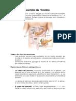 ANATOMÍA, FISIO E HISTOLOGÍA DEL PÁNCREA1.docx