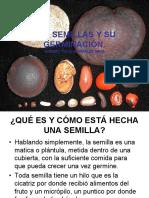 Semillas y su germinación (1)