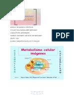 metabolismo 5.docx